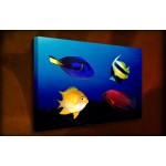 Tropical Fish - 38mm Deep Framed Canvas Print