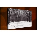 Central Park - 38mm Deep Framed Canvas Print