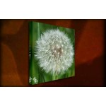 Dandelion - 38mm Deep Framed Canvas Print