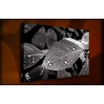 Leaf Drop - 38mm Deep Framed Canvas Print