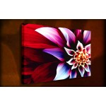 Fruitia - 38mm Deep Framed Canvas Print
