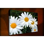 Daisies - 38mm Deep Framed Canvas Print