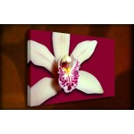 Treasured Orchid - 38mm Deep Framed Canvas Print