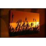 Wind Blow Reeds - 38mm Deep Framed Canvas Print