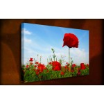 Red Poppies III - 38mm Deep Framed Canvas Print