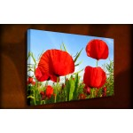 Red Poppies - 38mm Deep Framed Canvas Print