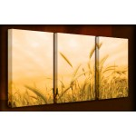 Golden Harvest - 3 Multi-Panel Canvas Prints