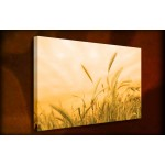 Golden Harvest - 38mm Deep Framed Canvas Print