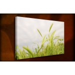Field Grass - 38mm Deep Framed Canvas Print